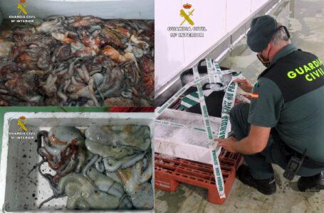 Más de 35 kilos de pulpo capturados ilícitamente en Mazarrón