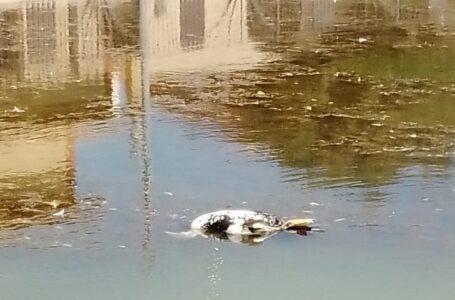IU-Verdes alerta de un episodio de anoxia en el estanque de Doña Inés